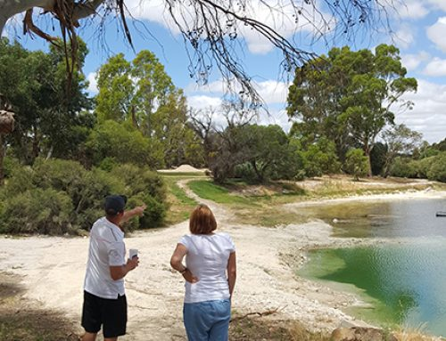 A First In South Australia – The Tintinara Disc Golf Course